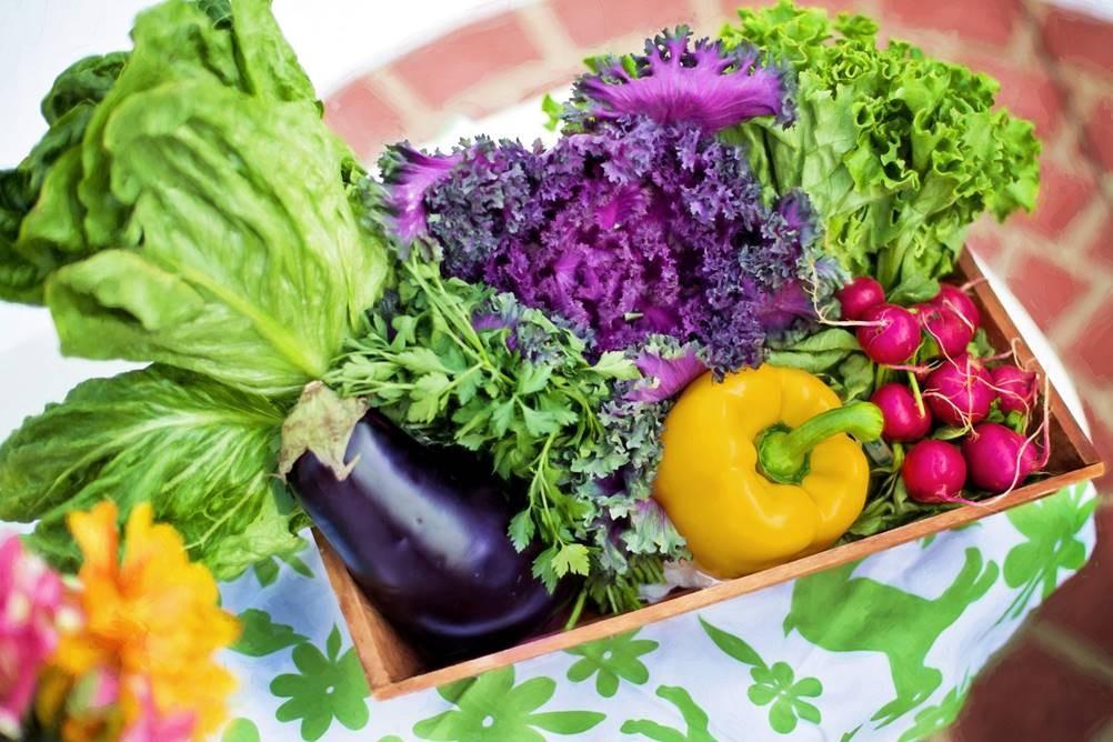 Como a agrofloresta pode contribuir para a preservação do meio e nossa alimentação?