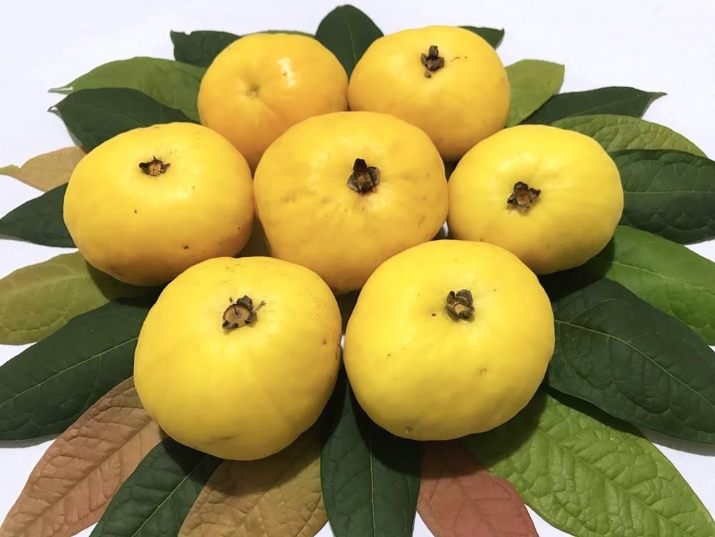 Benefícios do Araçá-boi - A poderosa Fruta da Amazônia